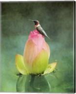 Hummingbird And The Lotus Flower Fine-Art Print