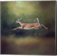 I Can Fly White Tailed Fawn Fine-Art Print