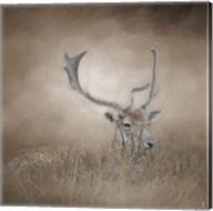 In Plain Sight Sika Deer Fine-Art Print