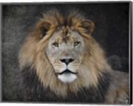 Male Lion Portrait 1 Fine-Art Print