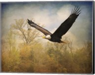 Monarch Of The Skies Bald Eagle Fine-Art Print