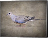 Mourning Dove Portrait Fine-Art Print