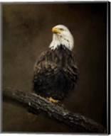 Portrait Of An Eagle Fine-Art Print