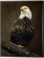 Portrait Of An Eagle Fine-Art Print