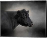 Portrait Of The Black Angus Fine-Art Print