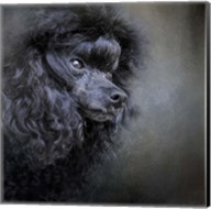 Snack Spotter Toy Black Poodle Fine-Art Print