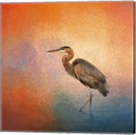 Sunset Heron Fine-Art Print