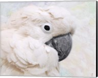 Umbrella Cockatoo Portrait Fine-Art Print