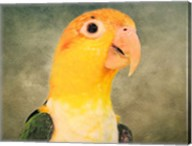White Bellied Caique Portrait Fine-Art Print