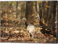 Wild Turkey In The Woods Fine-Art Print