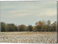 Cotton Field In Autumn Fine-Art Print
