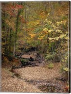 Creek Bed In Autumn Fine-Art Print