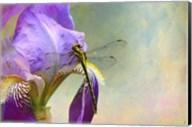 Say Hello To Spring Fine-Art Print