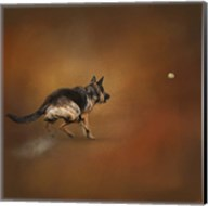 Gimme That Ball German Shepherd Fine-Art Print