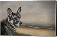 German Shepherd Dreaming Of The Beach Fine-Art Print