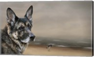 German Shepherd Dreaming Of The Beach Fine-Art Print