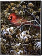 Cardinal & Thistles Fine-Art Print