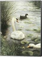 In The Pond Fine-Art Print