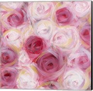 White and Pink Roses Fine-Art Print