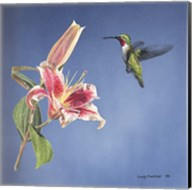 Hummingbird And Lily Fine-Art Print