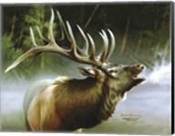 Elk In Mist Fine-Art Print