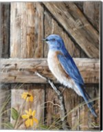 Old Barn Watcher Fine-Art Print