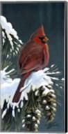 Winter Cardinal Fine-Art Print