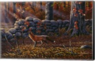Autumn Reds - Red Fox Fine-Art Print