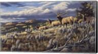 King Of The Hill - Elk Fine-Art Print
