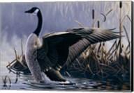 1992 Canada Goose Fine-Art Print