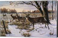 Cautious Crossing - Whitetails Fine-Art Print