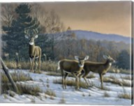 Prime Time - Whitetail Deer Fine-Art Print