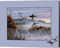 Ducks In Flight 2 Fine-Art Print