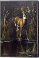 Whitetail Buck Fine-Art Print