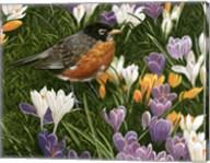 Springtime Robin With Crocus Fine-Art Print