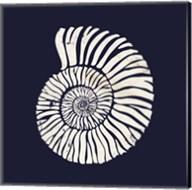Contemporary Coastal Shell II Fine-Art Print