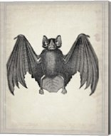 Bats 2 Fine-Art Print