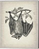 Bats 4 Fine-Art Print