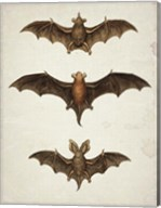 Bats Fine-Art Print