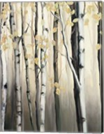 Golden Birch II Fine-Art Print