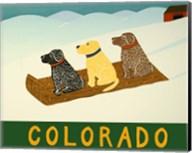 Colorado Sled Dogs Fine-Art Print
