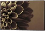 Chocolate Dahlia I Fine-Art Print