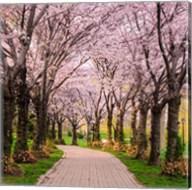 Cherry Blossom Trail Fine-Art Print