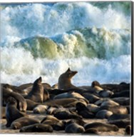 Cape Fur Seals, Cape Cross, Namibia Fine-Art Print
