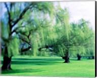 Willow Trees Fine-Art Print