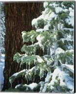 Sierra Nevada Mts., CA Fine-Art Print