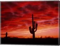 Organ Pipe Cactus State Park, AZ Fine-Art Print