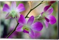 Cattleya Orchid Flower Blossoms Fine-Art Print