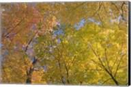 Mille Lacs Kathio State Park, Minnesota Fine-Art Print