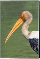 Painted Stork, Bandhavgarh National Park, India Fine-Art Print